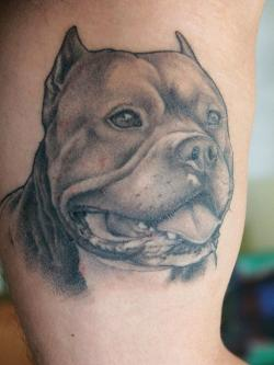 Bull Dog Face Tattoo