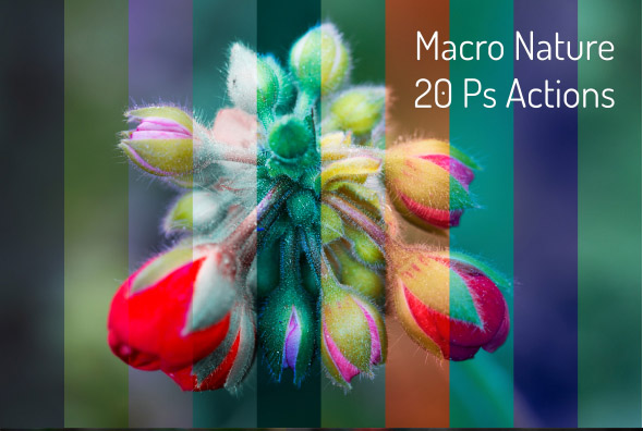 20 Macro Nature Actions