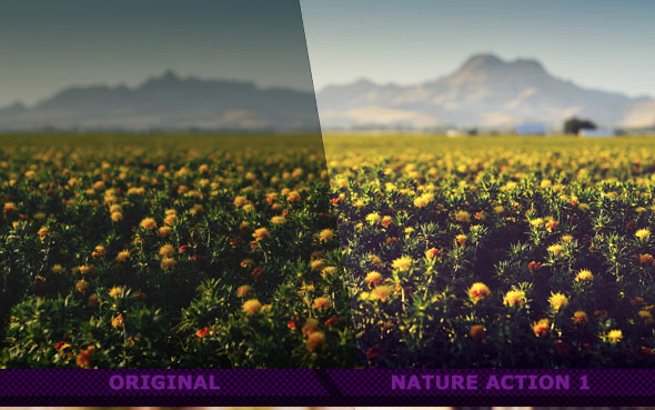 Nature Actions VIII