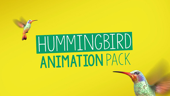 hummingbird-animation-pack