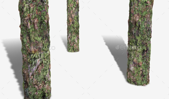 Thick Mossy Bark Seamless Texture