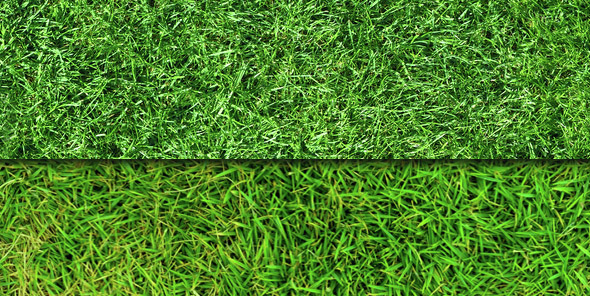 seamless-grass-patterns